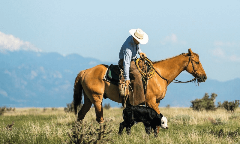 Ranchlands Case Study